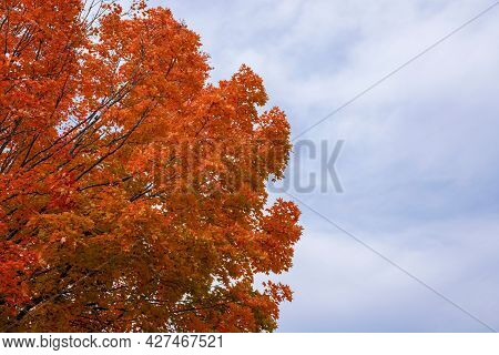 Autumn Maple Tree On Sky Background. Leaves Changing Colors In Fall. Orange And Red Leaves On Branch