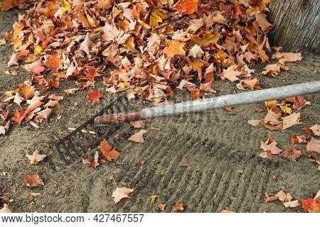 Raking Leaves In Autumn In The Garden. Pile Of Fallen Leaves Near Tree.