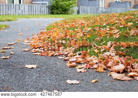 Autumn Leaves On The Street, Fallen On The Ground In The Yard Near Houses