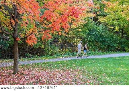 Fall In The Park With Fallen Leaves From The Tree And A Couple Walking On The Road. Maple Tree With