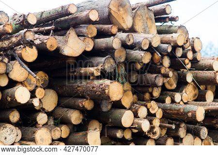 Beech Logs, National Park, Forest Lumber. Wood Material