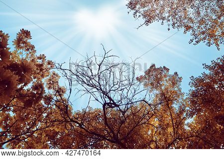 Trees With Thick Orange Leaves, In The Sky The Sun In The Form Of A Heart, Sunlight Rays. Tree Branc