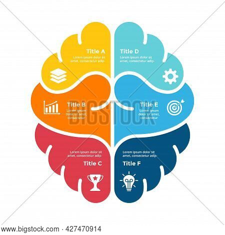 Human Brain Infographic. Left And Right Hemispheres. Vector Educational Template. Creative Thinking.