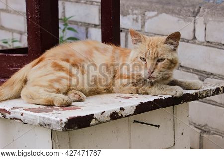Animals In Rubbish Looking For Food, Cats And Dog. High Quality Photo