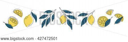 Fresh Lemons Print. Hand Drawn Line Lemon Illustration. Minimalism Lemon.