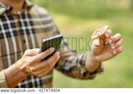 technology, picking season and people concept - close up of male hands with smartphone using mobile app to identify mushroom