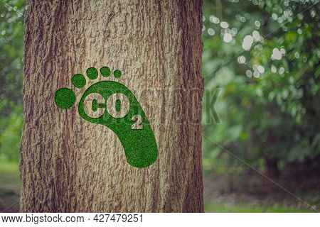 Footprint Symbolizing A Carbon Footprint Over Tree In Tropical Nature Summer Background, Concept Of