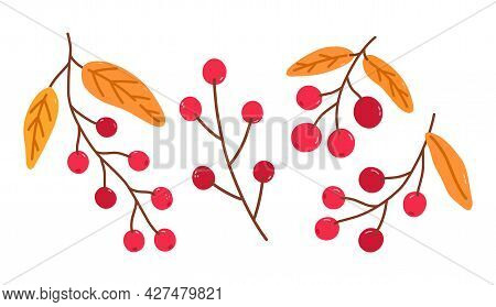 Set Of Twigs With Cranberries And Golden Leaves Isolated On A White Background. Vector Hand-drawn Il