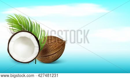 Tropical Coconut And Palm Branch Copy Space Vector. Whole And Damaged Freshness Coconut And Exotic T