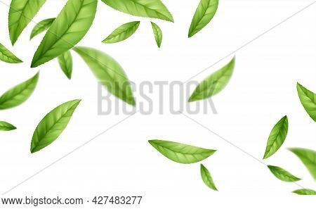 Realistic Flying Falling Green Tea Leaves Isolated On White Background. Background With Flying Green