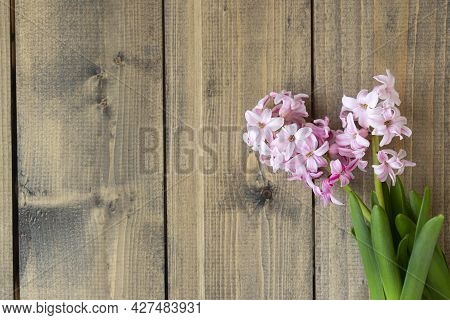 Pink Flowers On A Wooden Table. Pink Hyacinth Flowers On Wooden Background. Spring Coming Concept. S