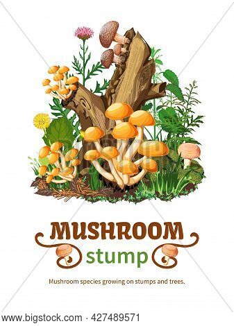 Vector Illustration Of Wild Mushroom Species Growing On Stumps And Trees With Honey Fungus Shiitake