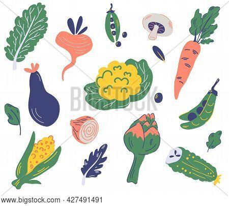 Set Of Vegetables. Cauliflower, Lettuce, Eggplant, Peas, Carrots, Radishes, Corn, Artichoke, Mushroo