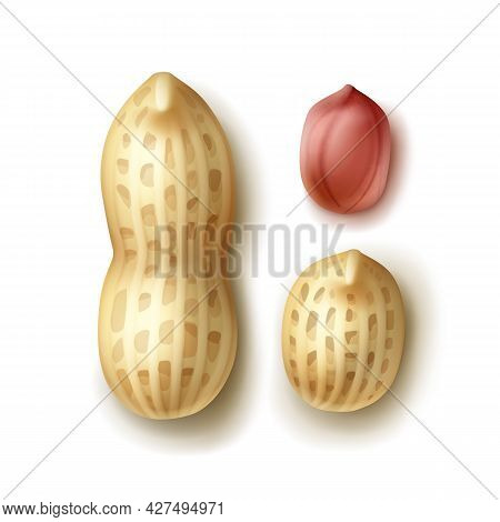 Vector Set Of Whole Peanuts With Shell Close Up Top View Isolated On White Background