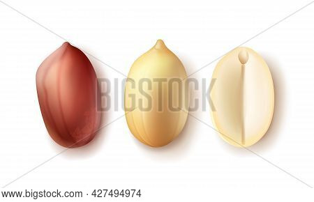 Vector Set Of Whole And Half Peeled, Unpeeled Peanut Kernels Top View Isolated On White Background