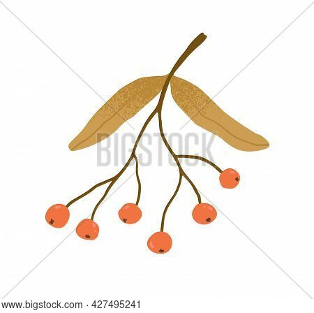 Autumn Rowan Branch With Leaves And Red Berries. Twig With Fall Leaf And Rowanberries. Autumnal Deco