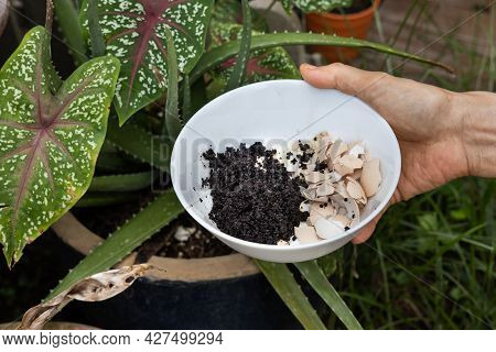 Hand Holding Crushed Egg Shell And Spent Coffee Grounds In Bowl. Natural Organic Fertilizers For Gar