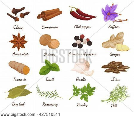 Collection And Herbs Vector Illustration Edible Plants For Cooking, Food Decoration, Eating