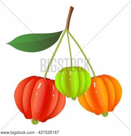 Berry Fruits, Vector Realistic Illustration Of Colorful Pitanga, Suriname Cherry, Brazilian Cherry O