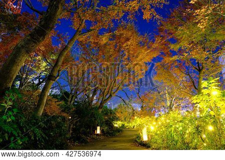 Colorful Autumn Trees In In Sunset Time, Light Up  Many Lamps For Tree Decorations Along Pathway In