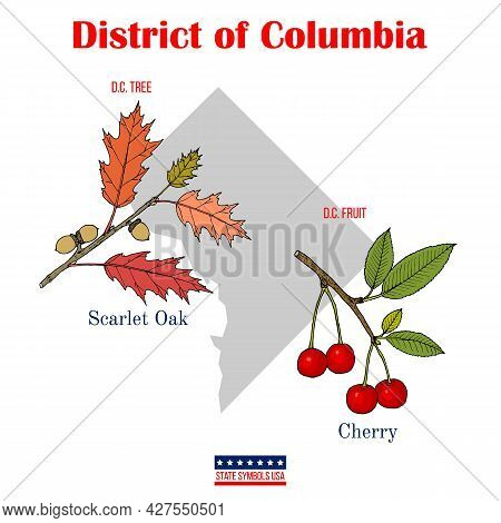 The District Of Columbia. Set Of Usa Official State Symbols. Vector Hand Drawn Illustration