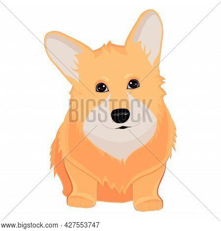 Realistic Dog Corgi Breed On A White Background - Vector Illustration