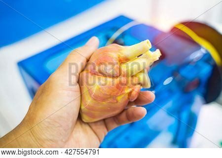 hand with object in shape of medically accurate a human heart printed on 3d printer