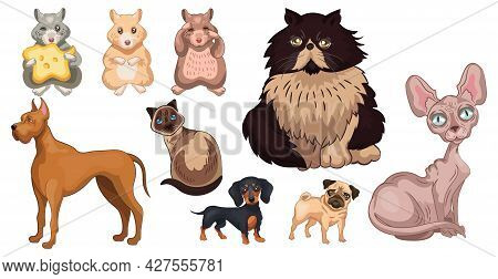 Breed Of Realistic Pets Cats, Dogs And Hamsters - Vector Illustration