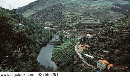 View of the vineyards are on a hills in Douro Valley, Portugal.