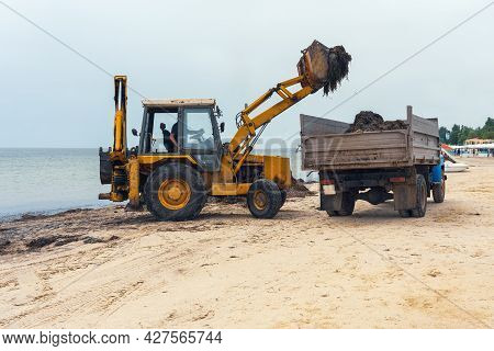 Cleaning The Beach From Algae, Excavator Loads Algae On A Truck.