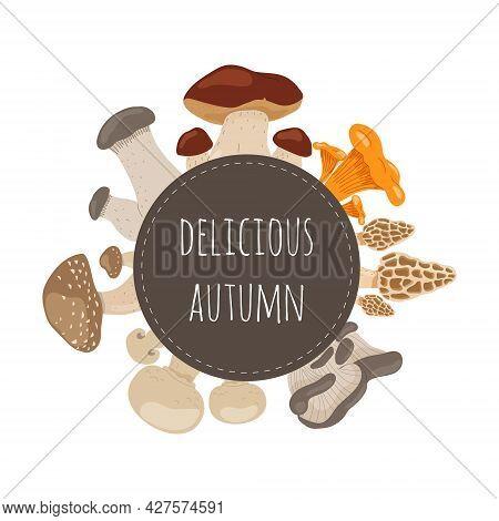 Mushrooms Set, Delicious Autumn. Bolete, Morel, Champignon, Chanterelle, King Trumpet, Oyster Mushro