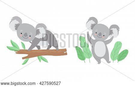 Cute Gray Koala Bear On Tree Branch And Waving Paw Vector Set