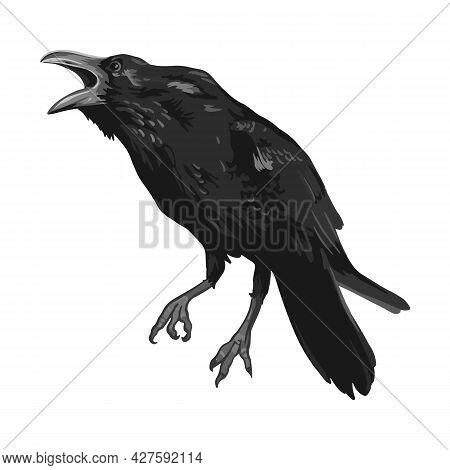 Raven Drawing High Quality Vector Illustration.black Raven.crow.