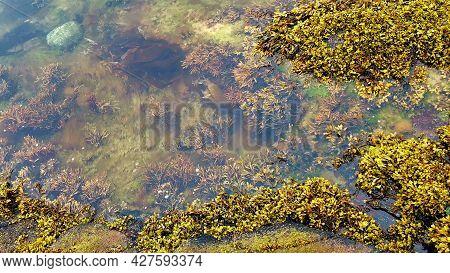 Aquatic Plants On Seashore In Tundra. Beyond Arctic Circle. Tundra Landscapes. Natural Vivid Backgro