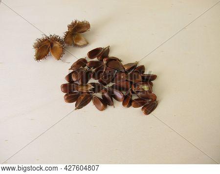 Unshelled Beechnuts From The European Beech On A Wooden Board