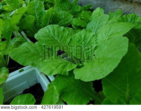 Greenery Background Of Nature Plant And Leaf