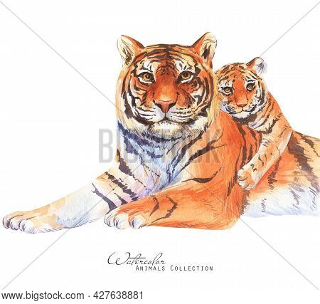 Tiger Family Watercolor Illustration. Tiger  Portrait. Father Tiger And Cub