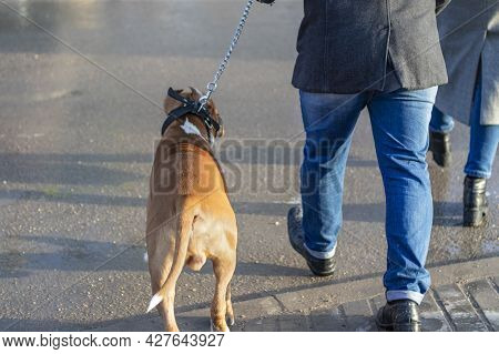 Owner And His Boxer Dog Are Similar To Each Other.