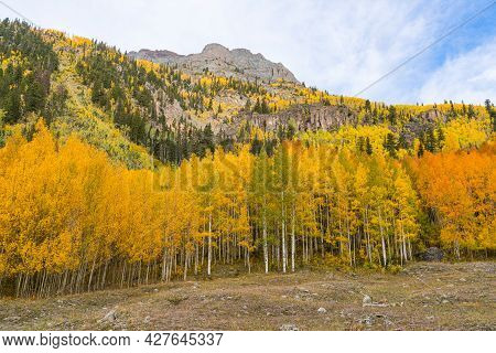 Yellow Aspen Trees On Mountain Side In The San Juan Mountains Of Colorado