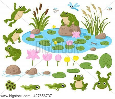 Cartoon Frogs. Cute Amphibian Mascots, Frogspawn, Tadpoles, Green Frogs, Water Lilies, Summer Pond A
