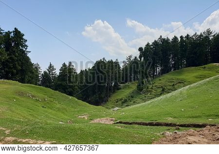Beautiful View Of Green Hilly Area With Pine Trees And Blue Sky In Himachal Pradesh, India