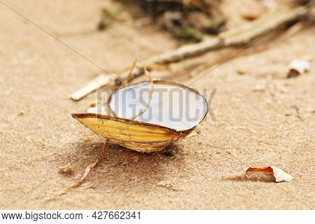 The Seashell Lies On The Sandy Shore Of The Beach. An Open Shell From A Sea Clam Lies On A Sandy Sho