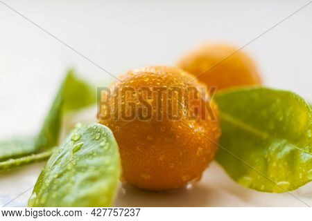 A Branch Of Natural Small Tangerines In Water Drops On A Light Background. Tangerines On A Branch Wi