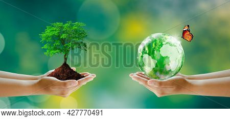 Hand Holding Tree And World Crystal Glass. Butterfly On Sunny Green Grass Bokeh Background. Save Cle