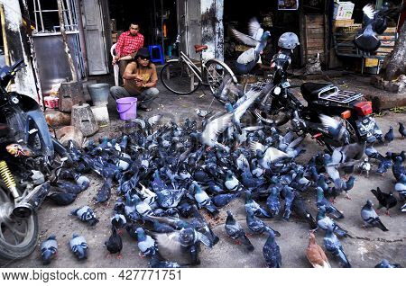 Burmese Men People Playing With Dove Bird And Feeding Corn Seeds Food To Pigeon Birds At Front Of Ga