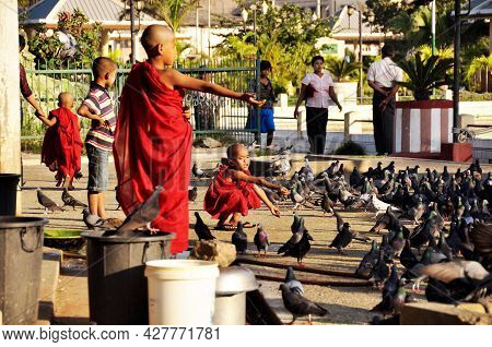 Burmese Children Boys Novice Group Travel Visit Playing With Dove Bird And Feeding Food To Pigeon Bi