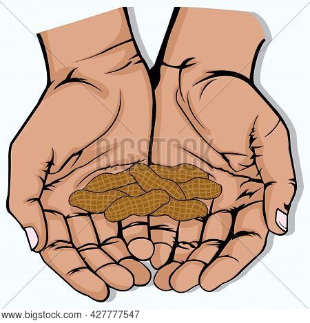 Vector Illustration Of Open Hand With Several Peanut On White Background. Grab Some Nuts Day. A Bunc