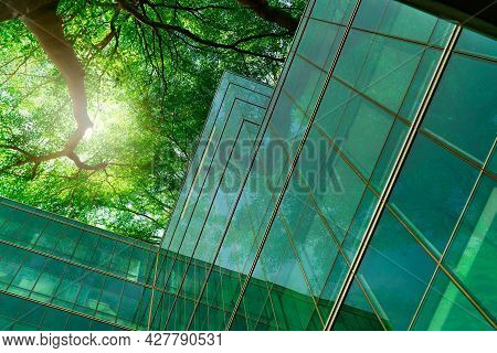 Eco-friendly Building In The Modern City. Green Tree Branches With Leaves And Sustainable Glass Buil