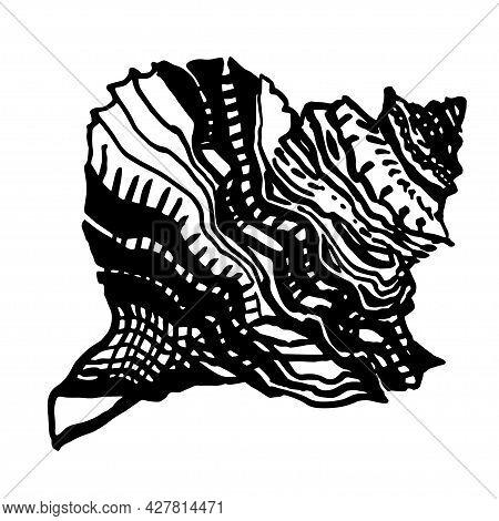 Ocean Ornamental Seashell Of Freehand Black Ink Line Isolated On White. Amazing Inhabitant Of The Se