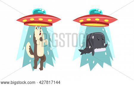 Ufo Abducting Animals Set, Alien Spacecraft Stealing Wolf And Whale Cartoon Vector Illustration
